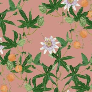 passiflora terracotta danica younghusband