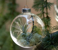 christmas-tree-ornaments-with-living-plants-1