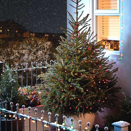 CHRISTMAS_2017_LIVETREE_SPRUCE_01i_bright
